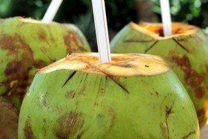 Coconuts goa